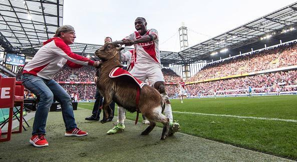 El delantero nigeriano del Colonia Anthony Ujah celebró su gol frente al Eintracht de Frankfurt agarrando por los cuernos a la cabra Hennes, mascota del equipo.