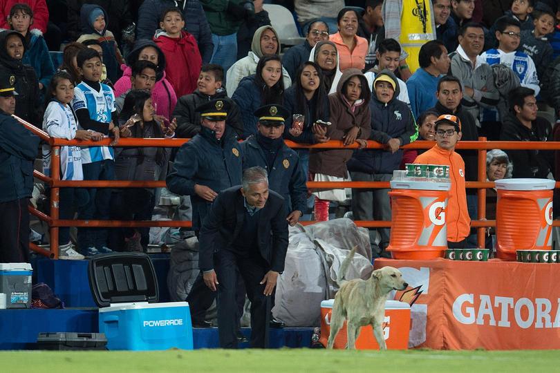 Después de la derrota de Jaguares contra Pachuca con la aparición de un perro y un gato, Sergio Bueno dijo que había sido a propósito para cortar el ritmo de juego.