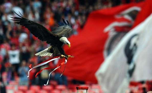 Águila del Benfica