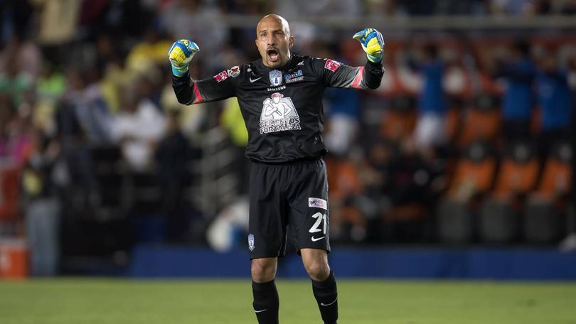 Conejo Pérez