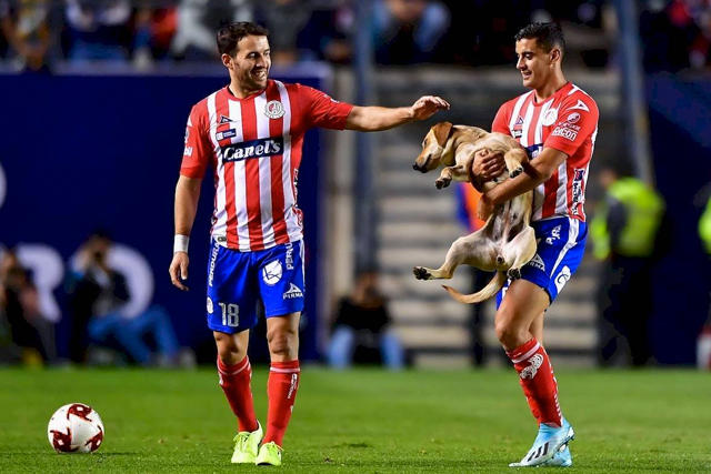 Tunita, perrita que interrumpió el San Luis vs Cruz Azul