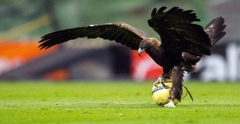 El águila parado en un balón en el Azteca.